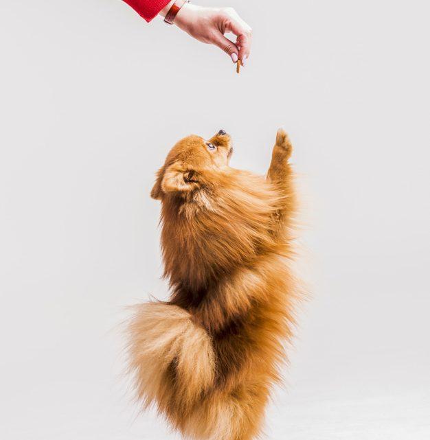 Izbira pravilne pasje hrane je ključna za zdravega psa